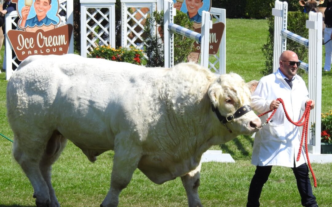 The Great Yorkshire Show – 14 to 16 July 2020 – a virtual event this year!